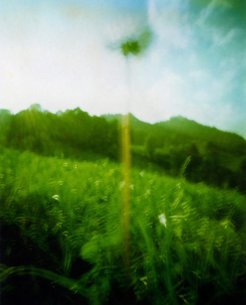 fiore bianco, trifoglio, che svetta nel cielo, sullo sfondo le montagne verdi, davanti un prato; Scansione da Polaroid