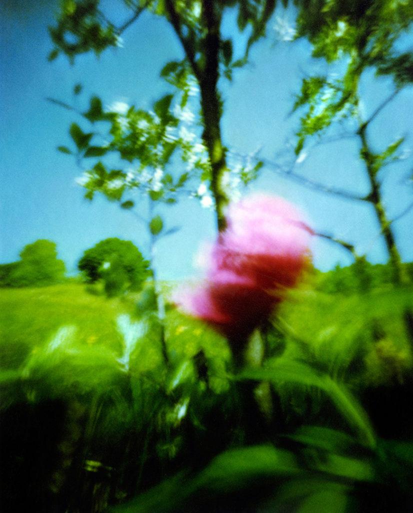Fiore rosso in un prato verde; Scansione da Polaroid