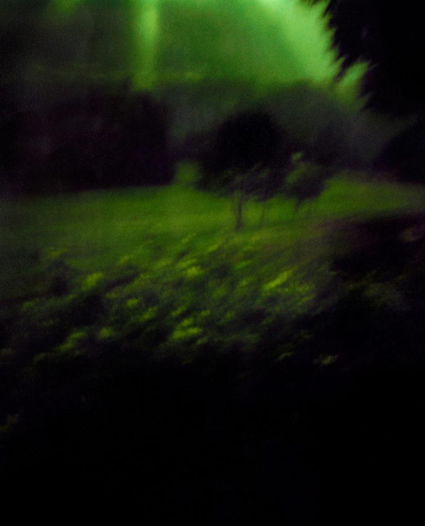 un prato molto scuro, sullo sfondo degli alberi, in alto dei raggi di luce