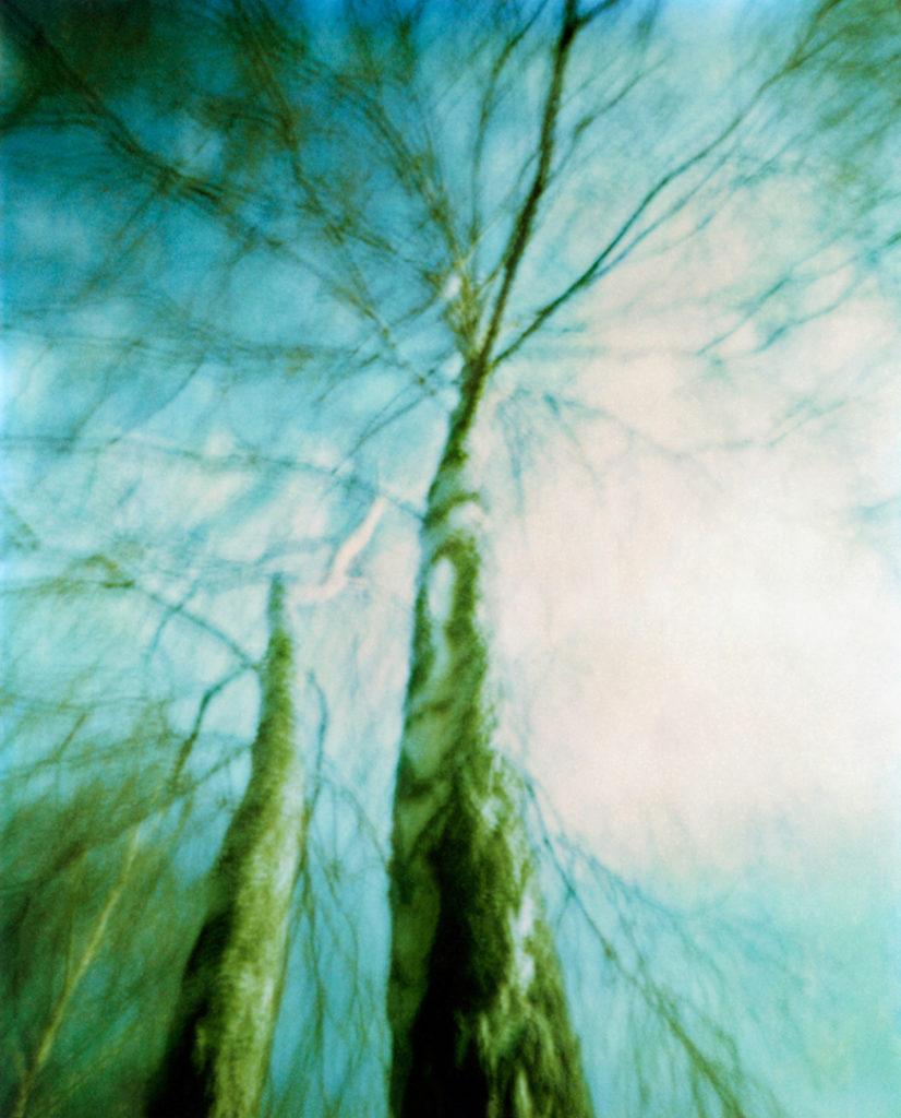 alberi ripresi dal basso verso l'alto